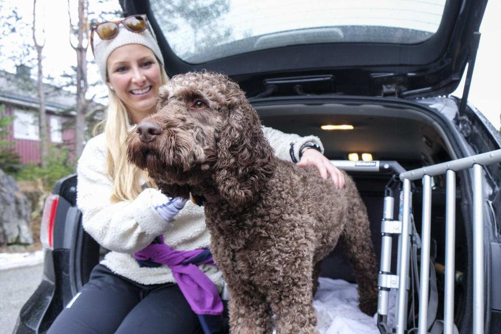 Løse hunder risiko i bilen
